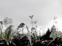 http://mireillegros.ch/files/gimgs/th-10__big-plants-web.jpg